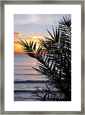 Swamis Palm Framed Print by Kelly Wade