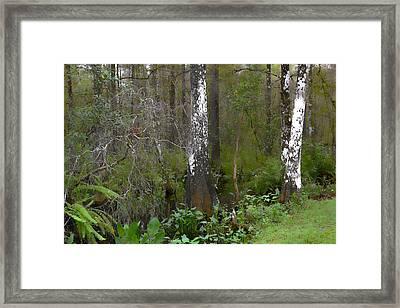 Swamp And Cypress Framed Print by Jeffrey Hamilton