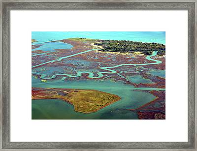 Swamp Area In Venice Framed Print by By LTCE