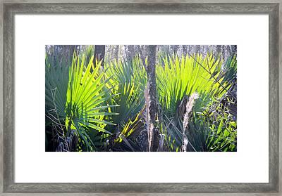 Swamp Art Framed Print