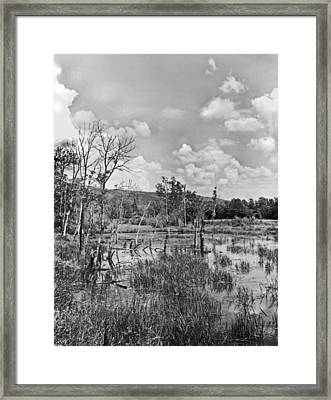 Swamp Framed Print by Curtis J Neeley Jr