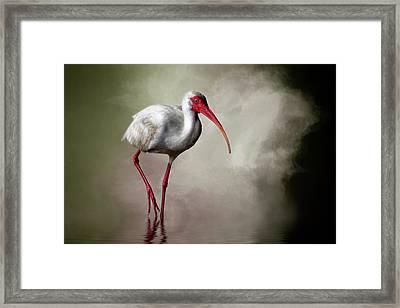 Swamp Days Framed Print