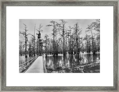 Swamp Dock Black And White Framed Print by Ester  Rogers