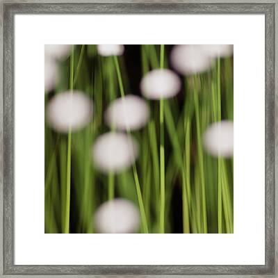 Swamp Flowers Framed Print