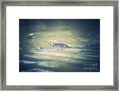 Swamp Gator Blues Framed Print