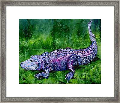 Swamp Gator Framed Print by Maria Barry