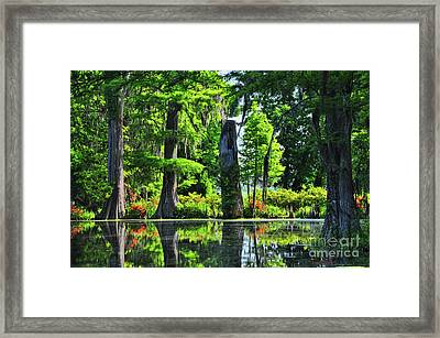 Swamp In Bloom Signed Framed Print
