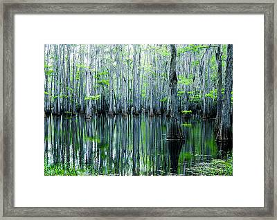 Swamp In Louisiana Framed Print