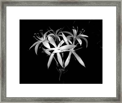 Framed Print featuring the photograph Swamp Lilies by Peg Urban