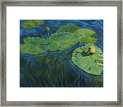 Swamp Lilies Framed Print by Phil Chadwick