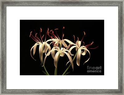 Swamp Lily Framed Print