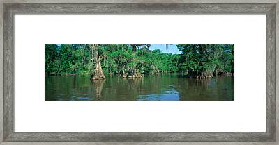 Swamp, Louisiana Framed Print by Panoramic Images