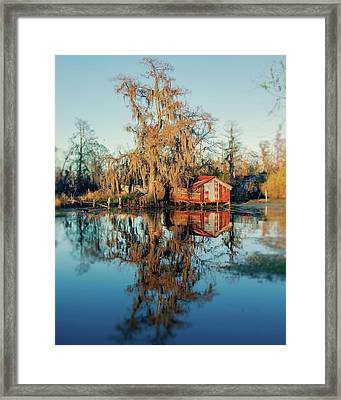 Swamp Reflections Framed Print