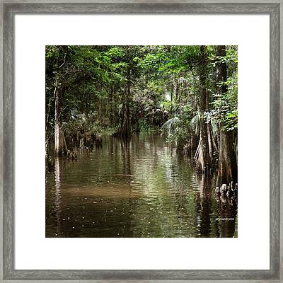 Swamp Road Framed Print