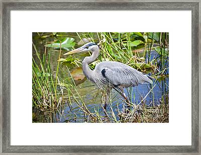 Swamp Stomp Framed Print
