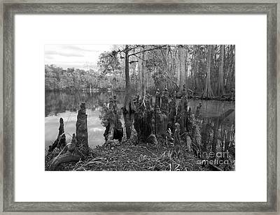 Swamp Stump Framed Print by Blake Yeager