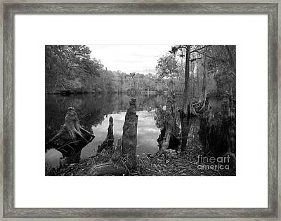 Framed Print featuring the photograph Swamp Stump II by Blake Yeager