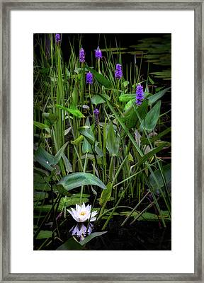 Swamp Things Framed Print by Bill Wakeley