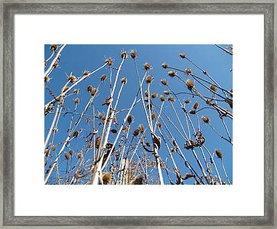 Swamp Things Framed Print by Jacob Stempky