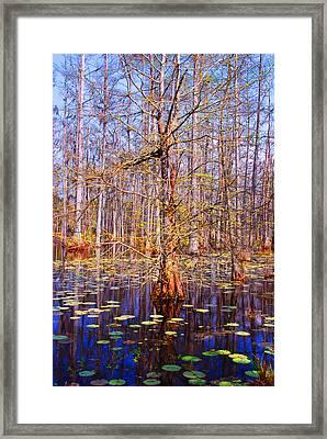 Swamp Tree Framed Print by Susanne Van Hulst