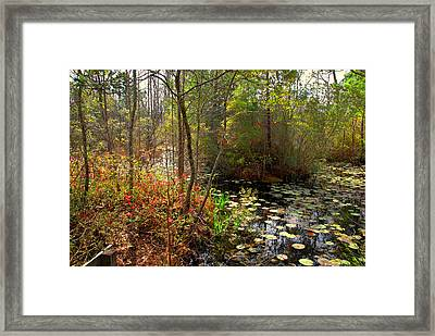 Swamps In Sc Framed Print by Susanne Van Hulst