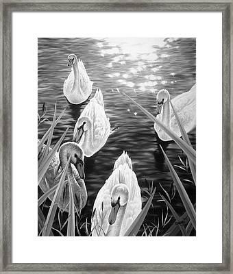 Swan 2 Framed Print