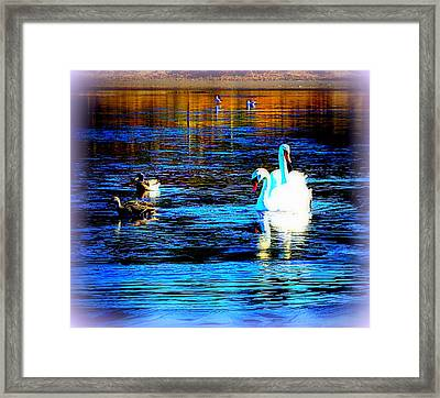 Where The White Swan Twins Are Ruling   Framed Print by Hilde Widerberg