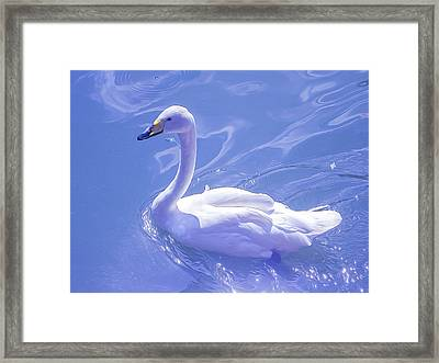 Swan Amazing, Style Oil Painting Framed Print by Nat Air Craft