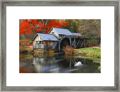 Swan At Mabry Mill Framed Print by Mary Timman