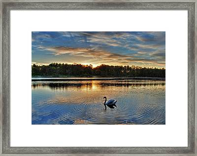 Swan At Sunset Framed Print