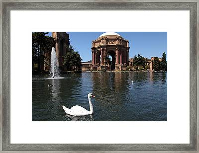 Swan At The San Francisco Palace Of Fine Arts - 5d18069 Framed Print