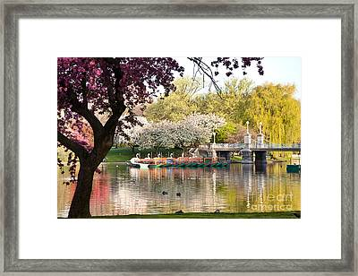 Swan Boats With Apple Blossoms Framed Print