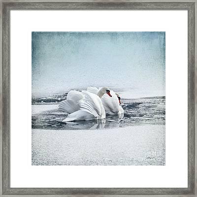 Swan Dance Framed Print by Jutta Maria Pusl