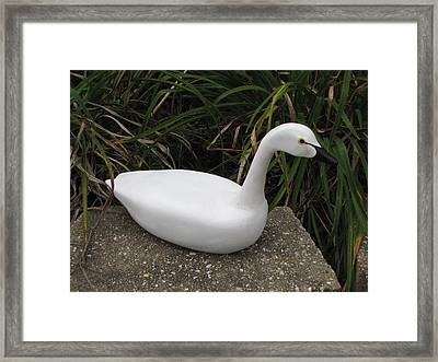 Swan-derful Framed Print