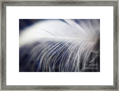 Swan Down Framed Print by Helen White
