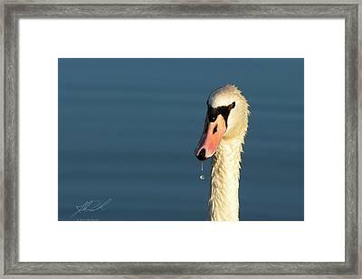 Swan Drop Framed Print