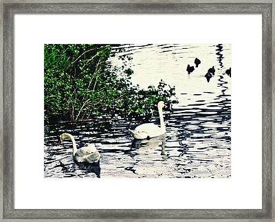 Framed Print featuring the photograph Swan Family On The Rhine 2 by Sarah Loft