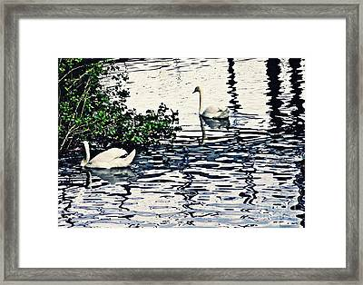Framed Print featuring the photograph Swan Family On The Rhine 3 by Sarah Loft