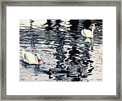 Framed Print featuring the photograph Swan Family On The Rhine by Sarah Loft