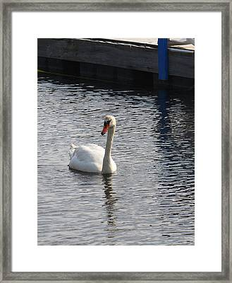 Swan Framed Print by Gerald Mitchell