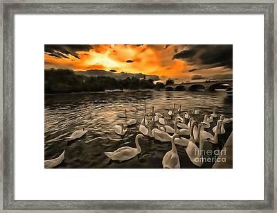 Swan Gloaming Kingston U K Framed Print