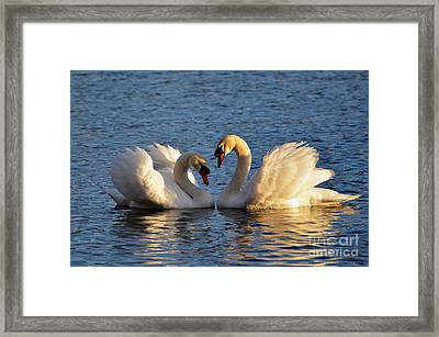 Swan Heart Framed Print by Mats Silvan