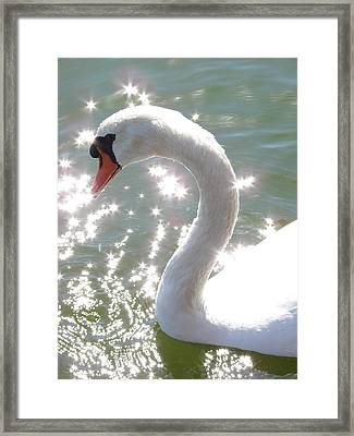 Swan II Framed Print by Mark Holbrook