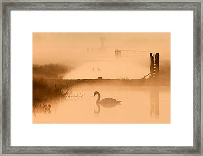 Swan In The Mist Framed Print by Roeselien Raimond