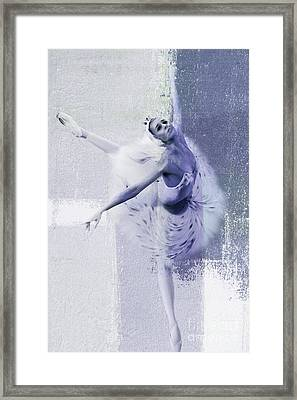 Swan Lake 01 Framed Print by Gull G