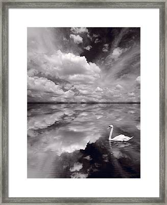 Swan Lake Explorations B W Framed Print
