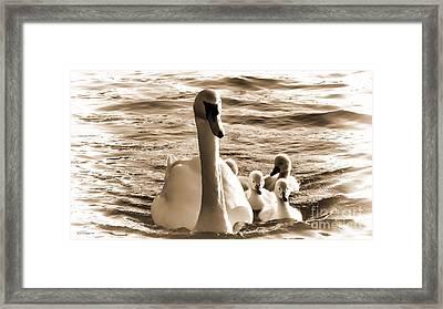 Swan Lake Framed Print by Jason Christopher