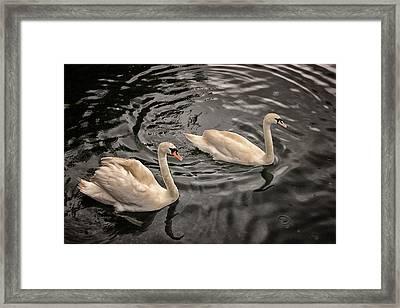 Swan Lake Framed Print by Martin Newman