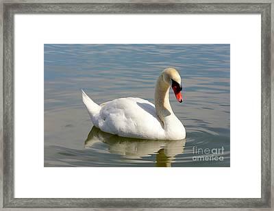 Swan Lake Morton Framed Print