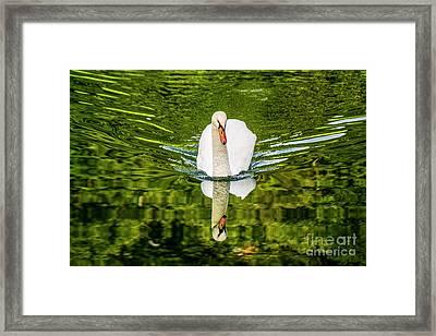 Swan Lake Nature Photo 892 Framed Print